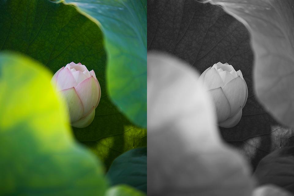 01_flower