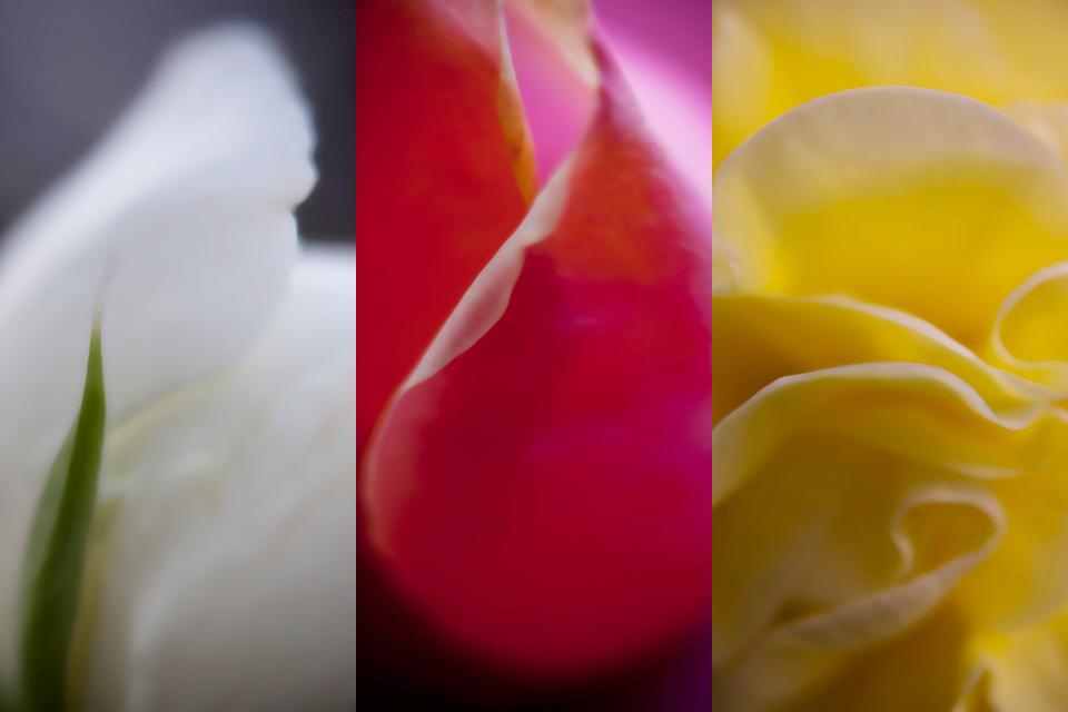 03_flower