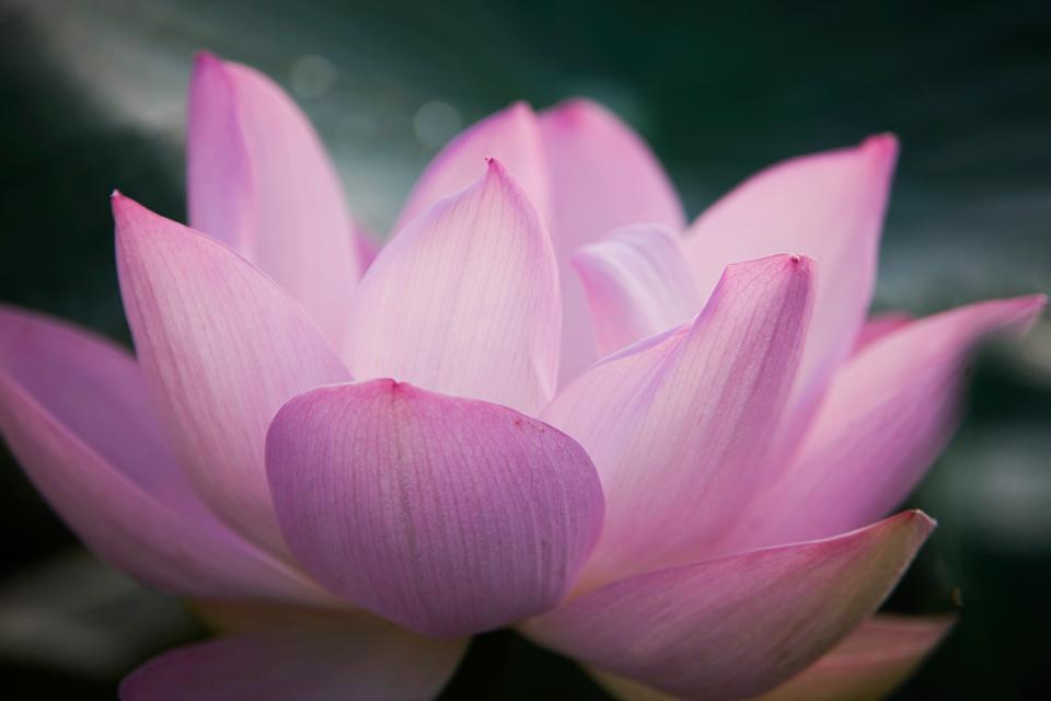 10_flower